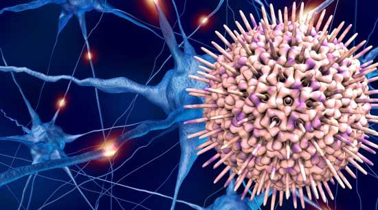 virus de l'herpès simplex type 1 (HSV-1