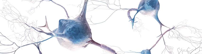 Le stress et ses effets sur le système immunitaire