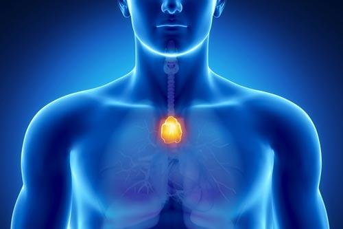 Le thymus, la glande de la santé et l'immunité   Monsystemeimmunitaire