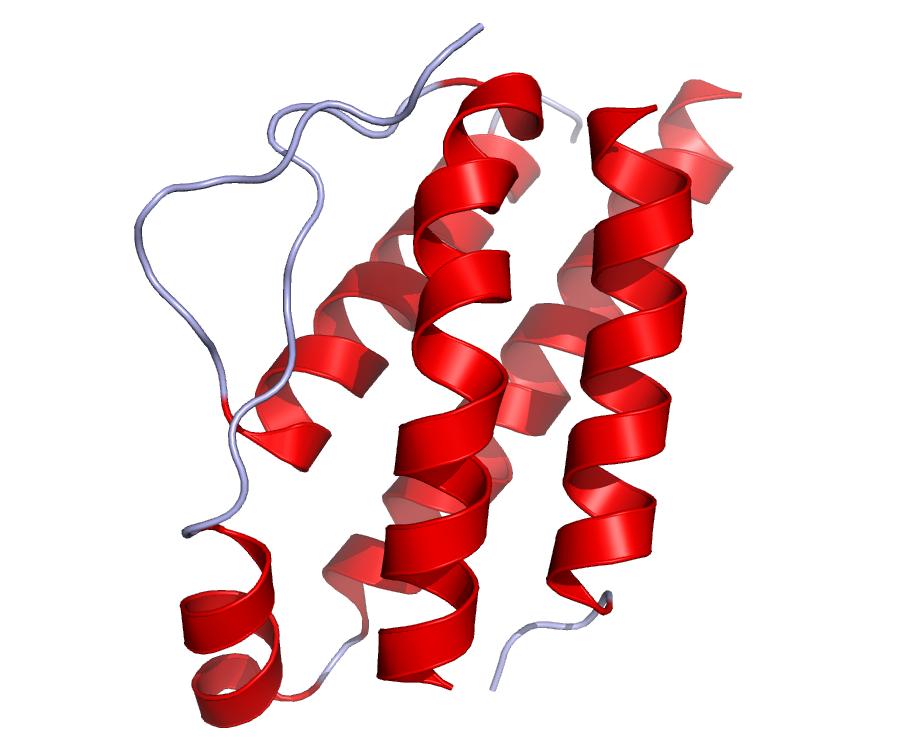 L'interleukine 2 : une cytokine multifonctions