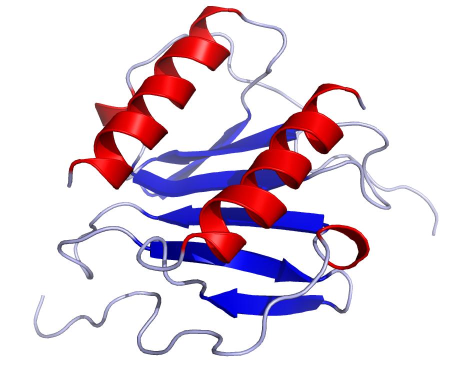 Le rôle de l'IL-8 dans la réponse immunitaire