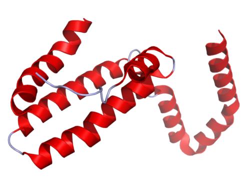 L'interleukine 10 et sa fonction dans l'organisme