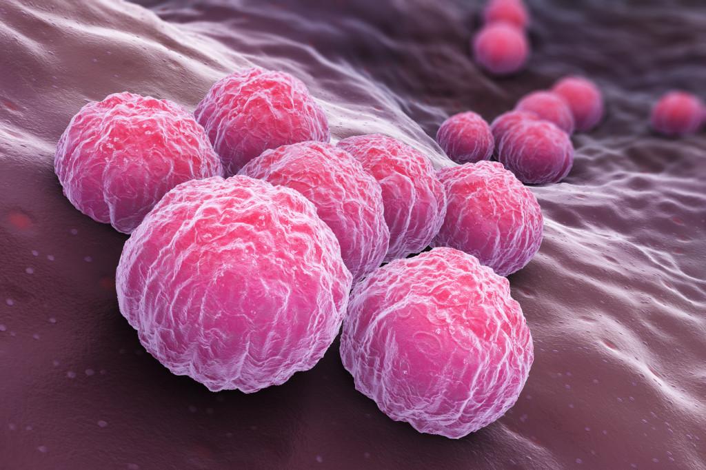Chlamydia, une bactérie qui se cache