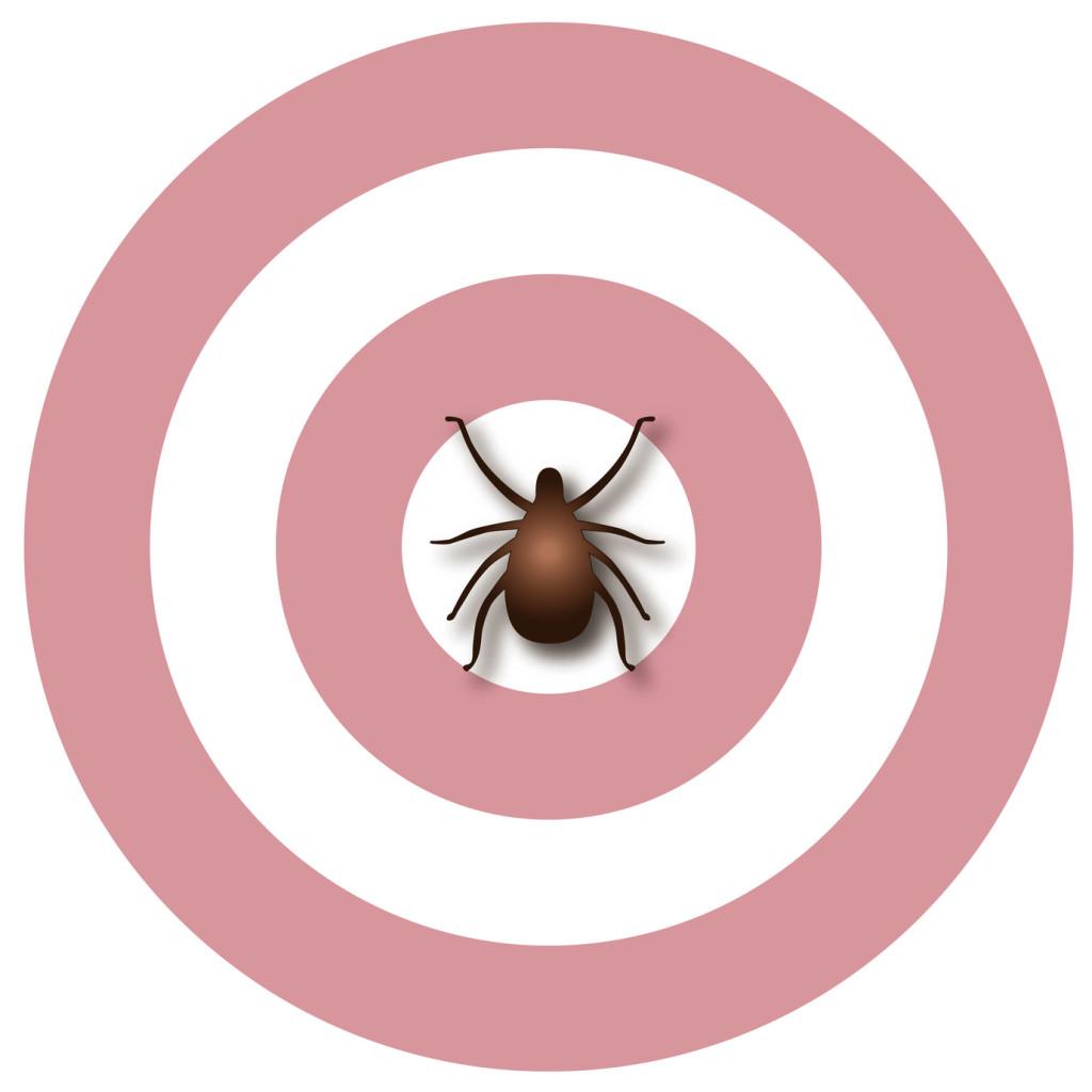 La maladie de Lyme ou borréliose