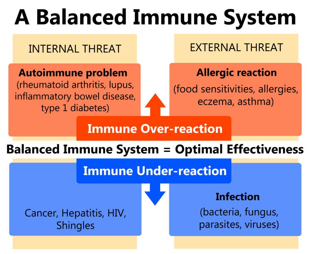 L'homéostasie immunitaire