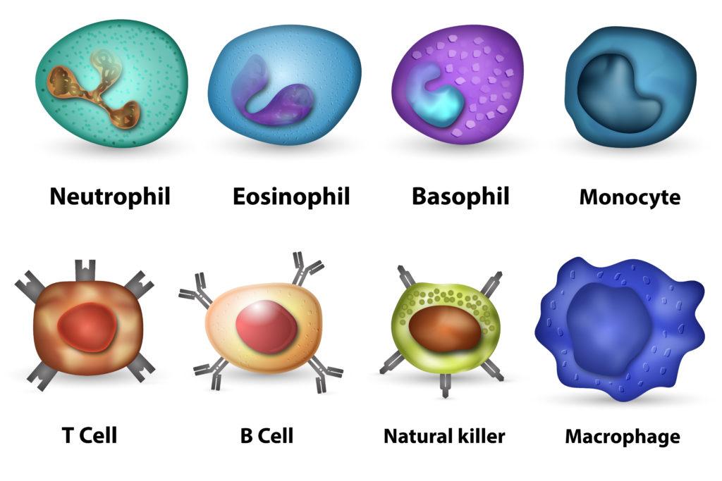Le système immunitaire face aux virus